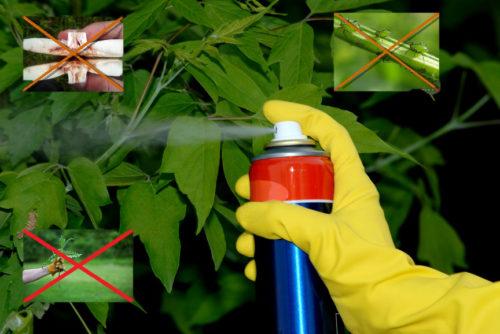 Применение пестицидов фото