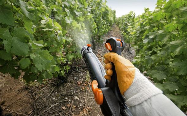 Обработка винограда фунгицидом Строби фото