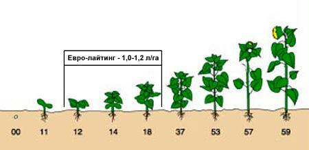 Внесение гербицида Евролайтинг фото